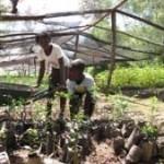 haiti-trees